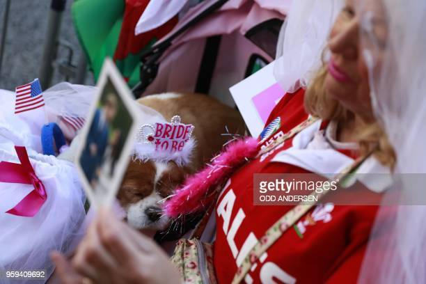 Royal wellwisher Anne Daly holds a photograph of Prince Harry and his US fiancee Meghan Markle with her dog Camilla in Windsor on May 17 2018 two...