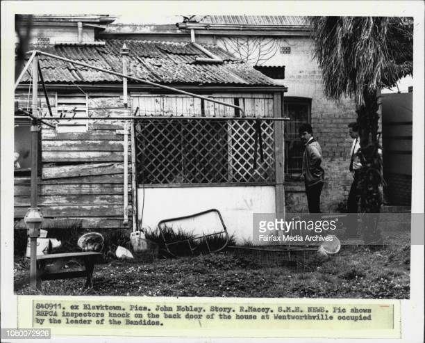 Rspca inspectors knock on the back door of the house at Wentworthville occupied by the leader of the Bandidos September 11 1984