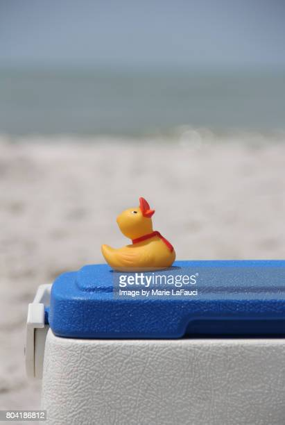 rubber duck at the beach on cooler - esky stock photos and pictures