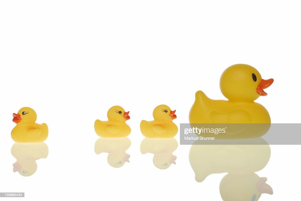 Rubber duck family, one duck heading the opposite direction, symbolic for finding your own way : Stock Photo