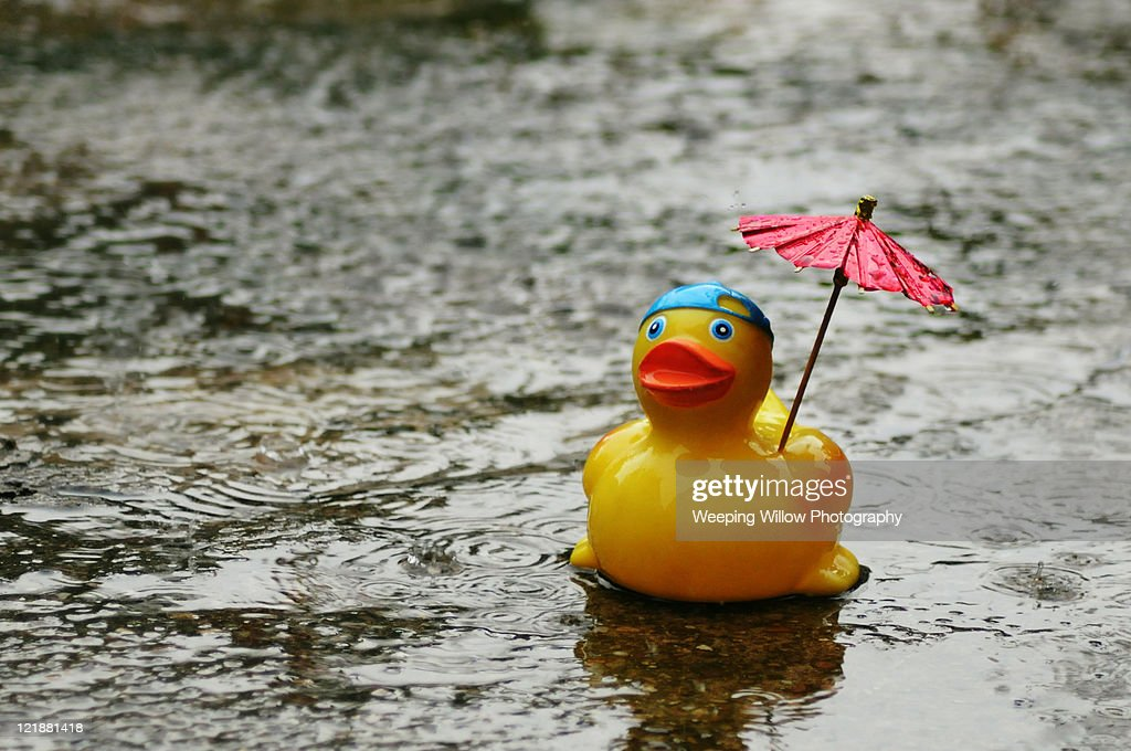 Rubber Duck In Rain With Umbrella Stock Photo Getty Images