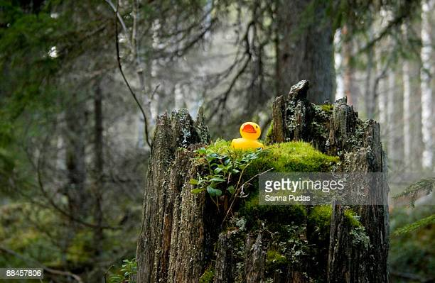 Rubber duck in the forest