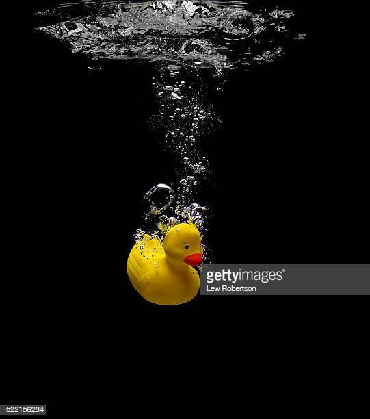 Rubber Duck Sinking in Water