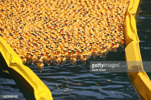 Rubber ducks are funneled toward the finish line in the Chicago River during the Chicago Ducky Derby on August 05, 2021 in Chicago, Illinois. Derby...