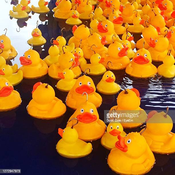 rubber ducks at fairground - carnival stock pictures, royalty-free photos & images