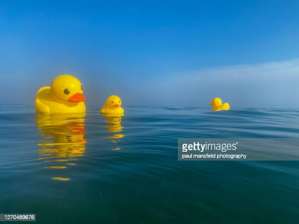 "rubber ducks at sea - ""paul mansfield photography"" stock pictures, royalty-free photos & images"