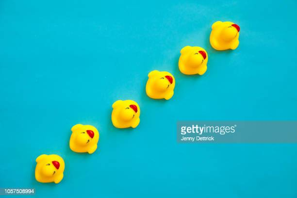rubber ducks in a line - following stock pictures, royalty-free photos & images