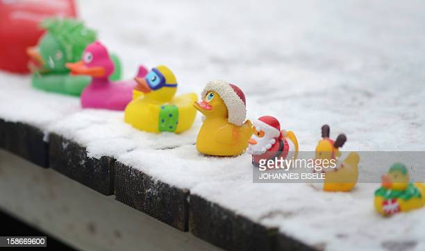 Rubber ducks of the winter swimmers stand in a row during a traditional ice swimming session on December 23 2012 in Lanke some 50 kilometers north of...