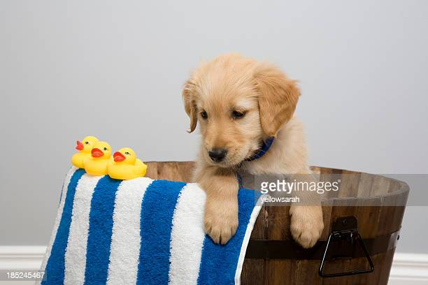 Rubber Ducky Pup