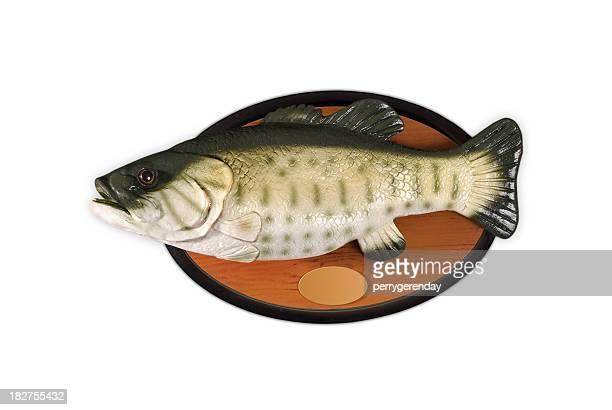 Fisch auf Schild an der Wand aus Gummi