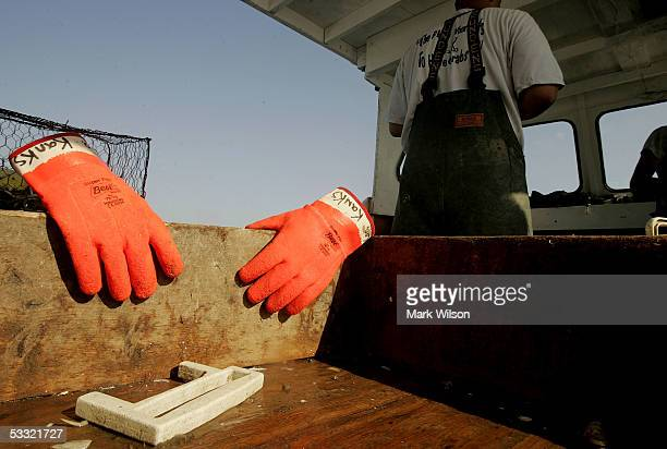 Rubber gloves and a measuring stick are Kevin Doane's tools aboard the commercial crabbing boat Foxy Roxyon the Chesapeake Bay August 3 2005 in...