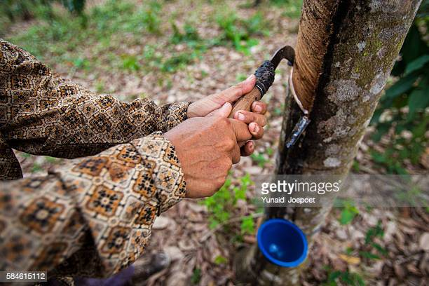 rubber tapper extracting latex with traditional tools - latex stock pictures, royalty-free photos & images
