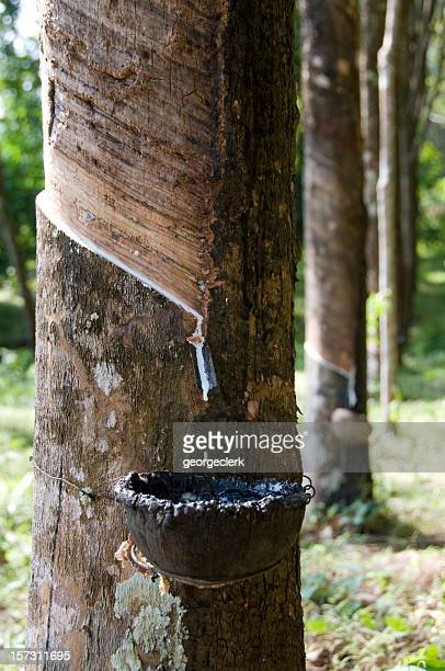 Rubber Tapping in South East Asia