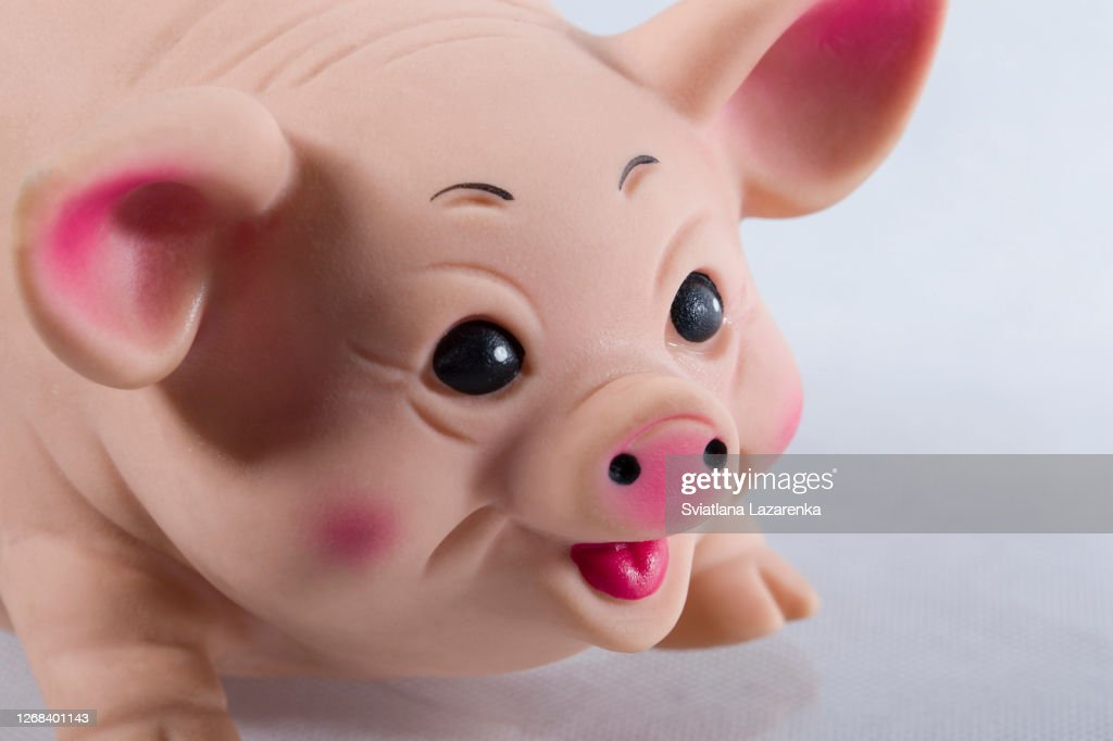 Rubber toy pig closeup. Pig muzzle : Stock Photo