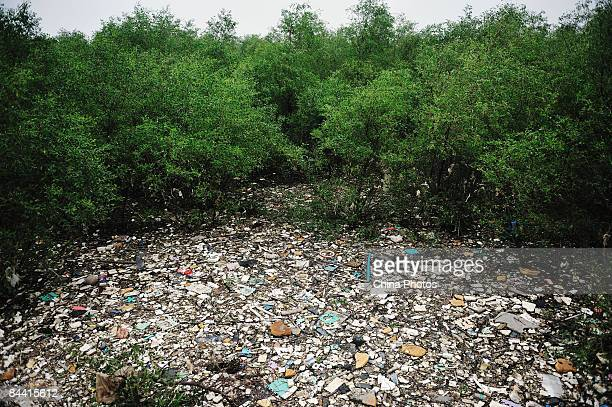 Rubbish floating on the Pearl River is seen in the mangrove woods at the Lianhuashan Mountain on October 12 2008 in Guangzhou of Guangdong Province...