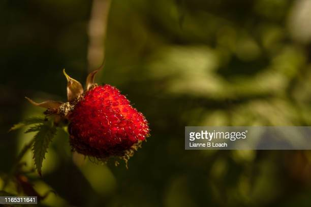 rubus rosifolius - lianne loach stock pictures, royalty-free photos & images