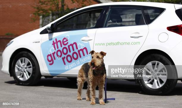 Ruby an Airedale Terrier has a look around the new Pets at Home Groom Room Toyota