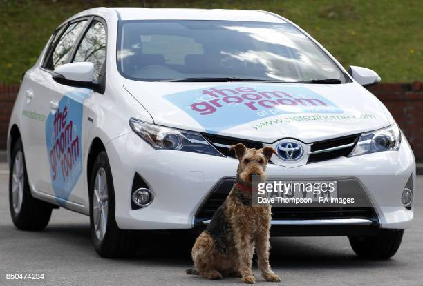 Ruby an Airedale Terrier stands in front of the new Pets at Home Groom Room Toyota