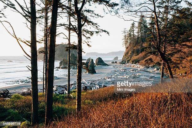 ruby beach at dusk, olympic national park, wa, usa - washington state stock pictures, royalty-free photos & images