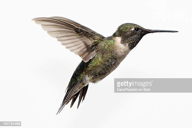 ruby throated hummingbird - colibri photos et images de collection