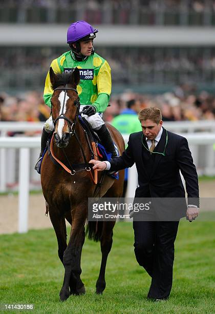 Ruby Walsh riding Kauto Star pulls up in the Betred Cheltenham Gold Cup Steeple Chase as assistant trainer Dan Skelton goes to meet him at Cheltenham...