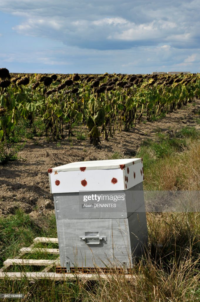 apiculteur vendee