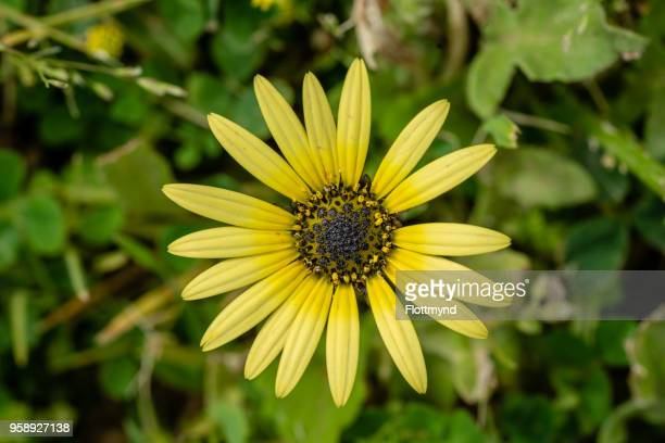 Rudbeckia or black-eyed-susan with yellow flowers