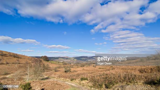 rudry common - nigel owen stock pictures, royalty-free photos & images