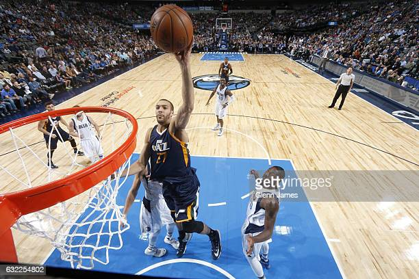 Rudy Gobert of the Utah Jazz goes in for the lay up against the Dallas Mavericks on January 20 2017 at the American Airlines Center in Dallas Texas...