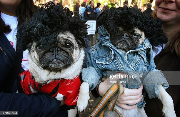 Rudy poses as Michael Jackson and Parker poses as his girlfriend in the 'Thriller' video during the 17th annual Tompkins Square Halloween Dog Parade...