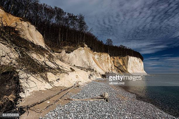 Ruegen erosion the chalk cliffs in the national park at the island of Ruegen in spring time April 08 MecklenburgWestern Pomerania Sassnitz Germany