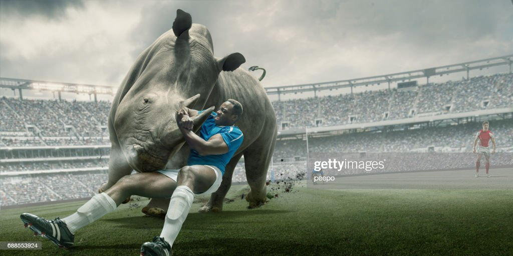 Rugby Player Tackling Rhino During Match in Outdoor Stadium : Stock Photo