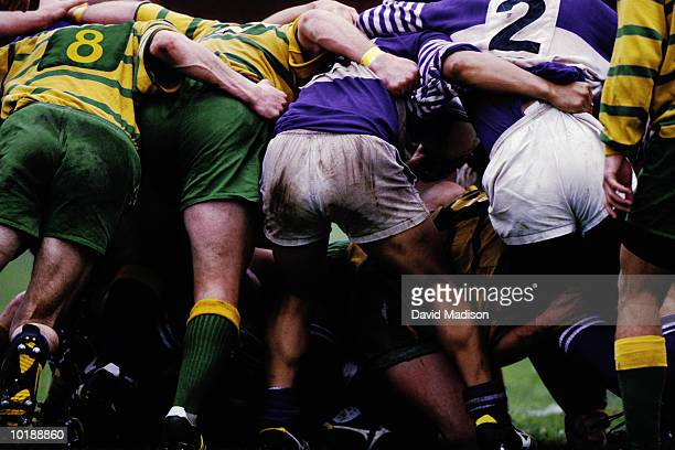 rugby players in scrum position, rear view - scrum stock pictures, royalty-free photos & images