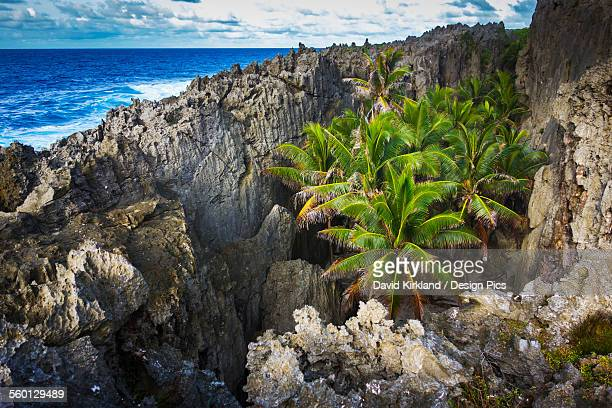 rugged coastline with palm trees - niue island stock photos and pictures