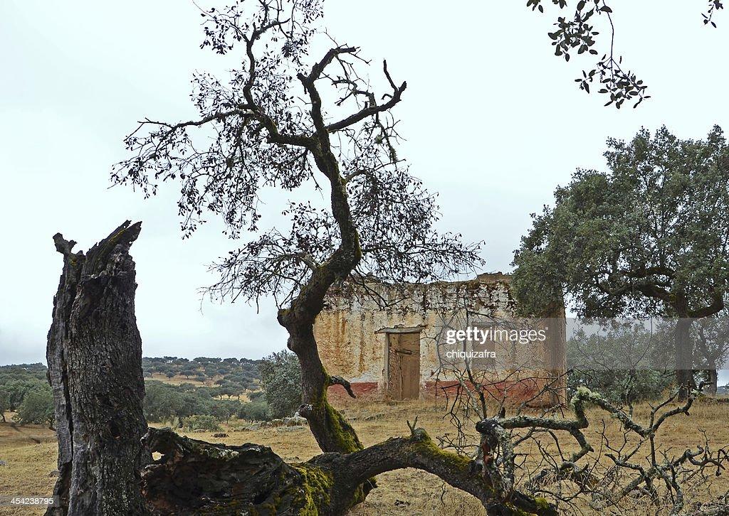 ruin and death : Stock Photo