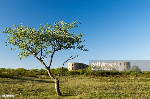 ruin of the borgholm castle on o?land island  - エーランド ストックフォトと画像