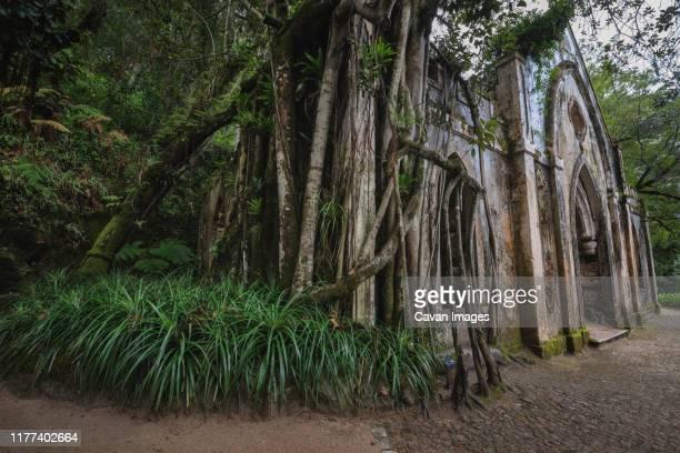 ruins in monserrate palace gardens. - sintra fotografías e imágenes de stock