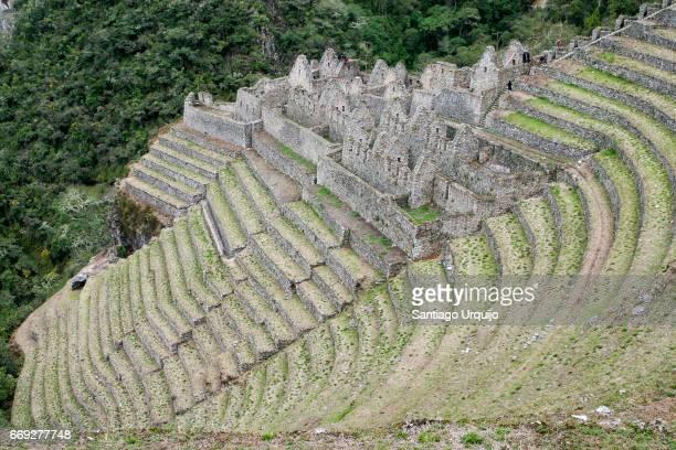 Ruins in terraced fields at Machu Picchu