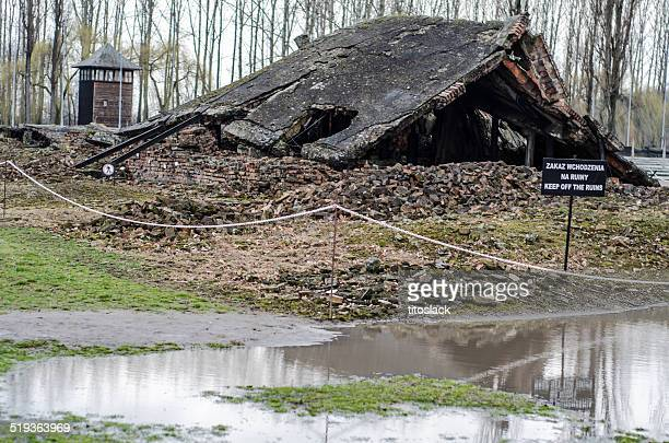 ruins of a auschwitz ii / birkenau gas chamber - man made structure stock pictures, royalty-free photos & images