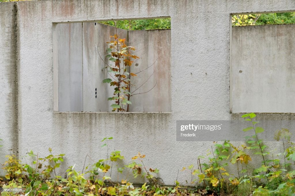 Ruins of a building, prefabricated concrete unit of a house, recaptured by nature, Mecklenburg-Western Pomerania, Germany : Stock-Foto