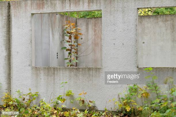 Ruins of a building, prefabricated concrete unit of a house, recaptured by nature, Mecklenburg-Western Pomerania, Germany