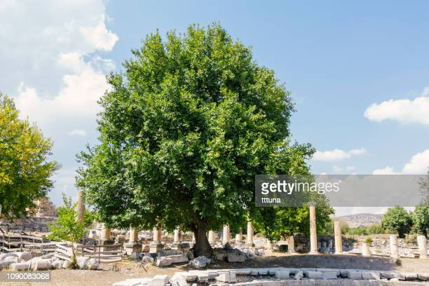 ruins of aphrodisias - greek mythology stock pictures, royalty-free photos & images
