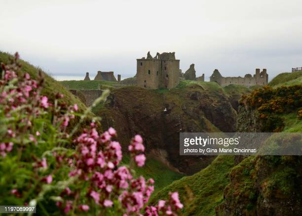 ruins of dunnottar castle, in scotland with flowers in foreground - dunnottar castle stock pictures, royalty-free photos & images
