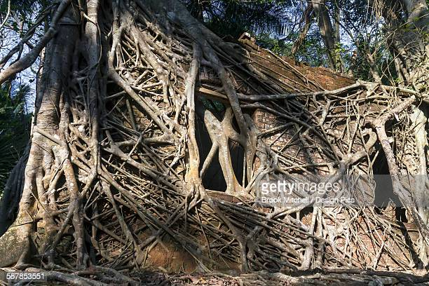 ruins of part of a colonial british jail on ross island a short boat ride from the capital of the andamans - brook mitchell fotografías e imágenes de stock