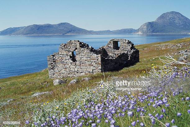 Ruins of the old stone church at Hvalsey in South Greenland Hvalsey Church was probably built in the 14th century but is the best preserved of the...