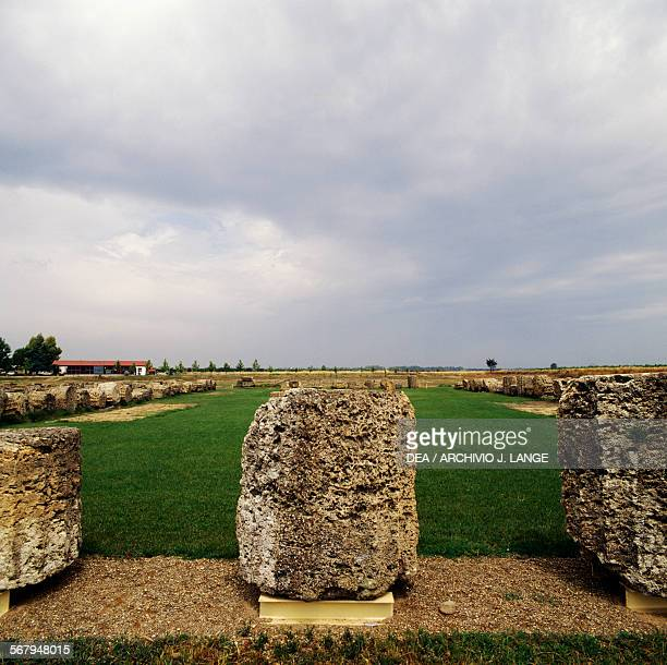 Ruins of the Temple of Apollo in Doric style 6th century BC archaeological area of Metapontum fraction of Bernalda Basilicata Italy