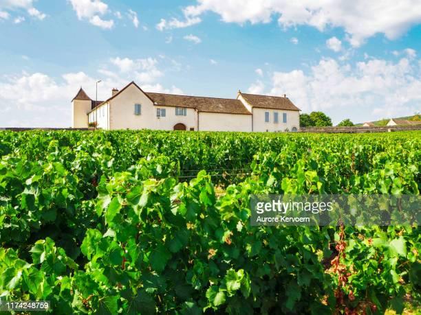 フランスのブルゴーニュのムルソー、ヴォルネー、ポマードの近くにあるルリーブドウ園 - シャロンシュルソーヌ ストックフォトと画像