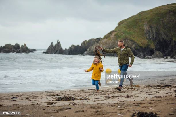 run away from the slimy seaweed! - autumn stock pictures, royalty-free photos & images