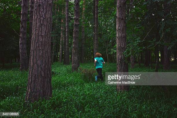 run in the forest - catherine macbride stock pictures, royalty-free photos & images