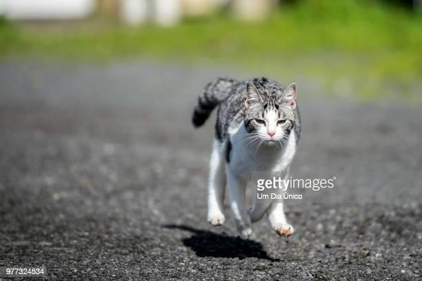 run!! - um animal stockfoto's en -beelden